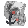 Перезаряжаемый стимулятор простаты с вибрацией Rechargeable P-spot Embracer